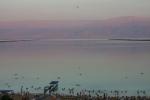 Dead Sea6