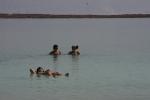 Dead Sea7